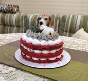 Тортик!  Неужели мне..jpg